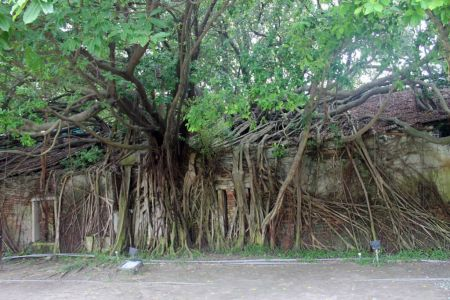 Anping Treehouse