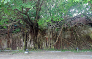 anping-treehouse
