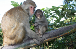 wushan-macaque-natural-reserve